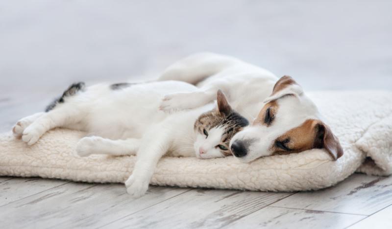 Olio di CBD per cani e gatti: utilizzo e dosaggi